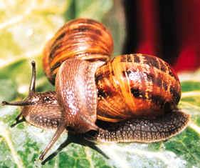 Grupo Gastropoda